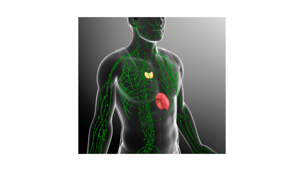 cbd immunrendszer, autoimmun betegség