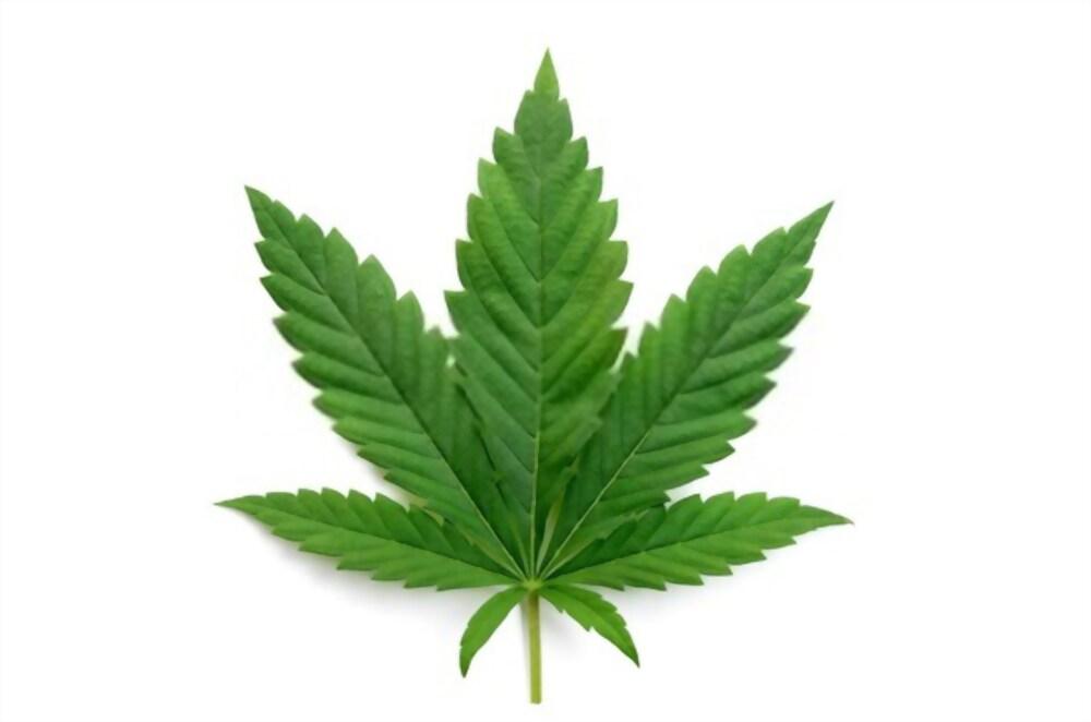 cannabis indika kannabisz indika